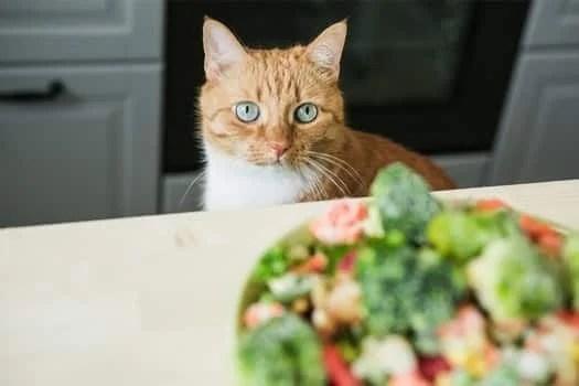 【貓咪可以吃什麼?】10種對貓咪有益的蔬菜水果 「木瓜」居然入榜 | CatCity 貓奴日常