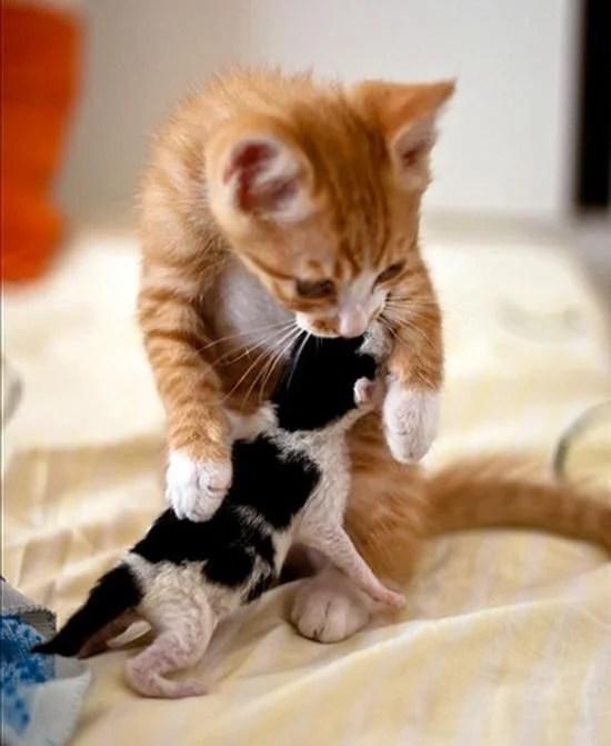 【貓咪領養事項】養貓前該準備?一文了解收容所貓咪認養流程! | CatCity 貓奴日常
