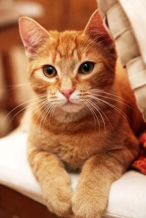 【米克斯】橘貓個性 7 大分析!其中「吃貨+胖呆」特質最討喜 | CatCity 貓奴日常