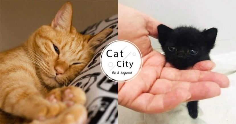 【貓黴菌癥狀】你家貓發霉了?皮膚有「 4 大癥狀」代表中獎啦! | CatCity 貓奴日常