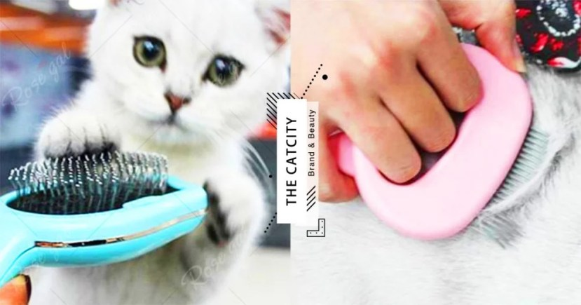 【換毛季梳子怎麼選】6 款貓毛梳基本介紹,長毛,短毛貓用的梳子大不同!   CatCity 貓奴日常