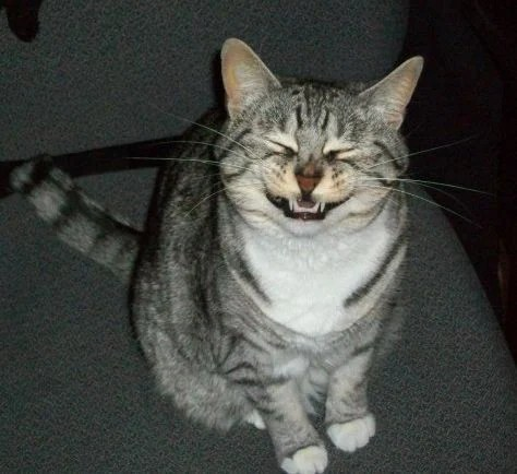 【貓咪冷知識】貓對「噴嚏聲」獨特反應!嘶嘶叫到底是為啥?3 種原因大解析!   CatCity 貓奴日常