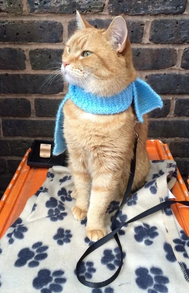 回顧《遇見街貓BOB》電影花絮 BOB 演技讓導演都驚嘆:天生演員!   CatCity 貓奴日常