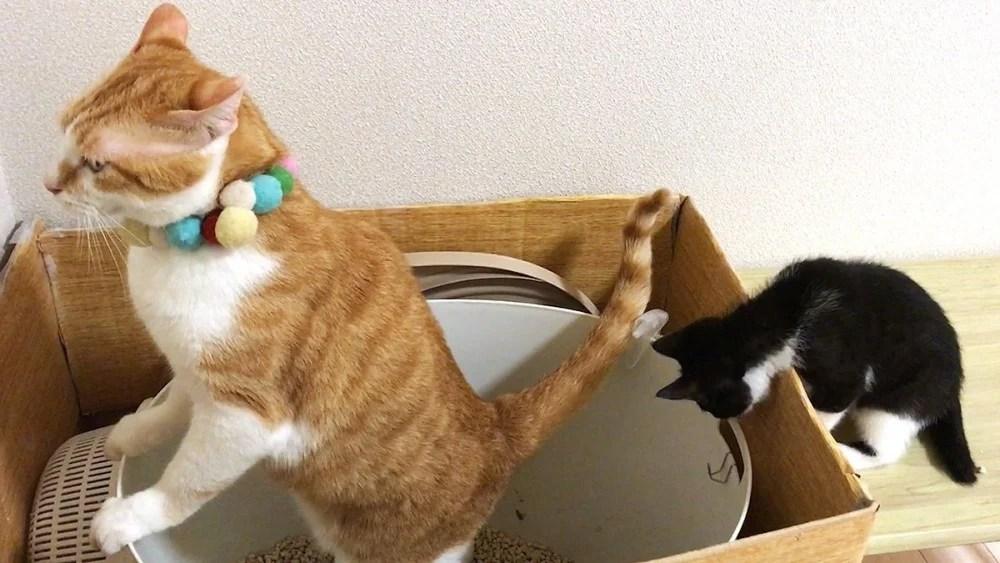 超活潑小貓「露肚睡姿」超萌,兄弟睡相神同步 網:賓士貓很皮喔 | CatCity 貓奴日常