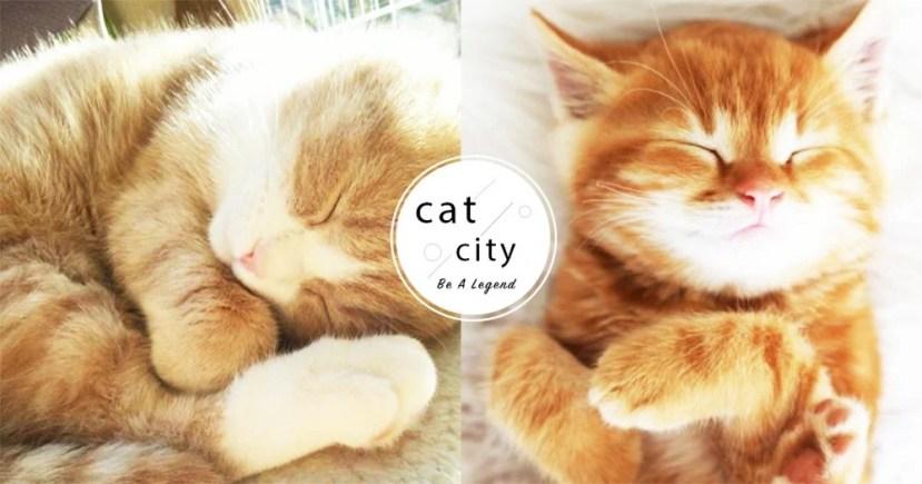 【貓咪冷知識】貓睡這麼久正常嗎?揭秘「長時間睡覺」的 3 個主要原因   CatCity 貓奴日常