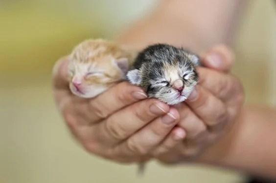 【絛蟲感染癥狀】屁屁,糞便出現蟲?貓咪感染絛蟲的 8 種癥狀!   CatCity 貓奴日常