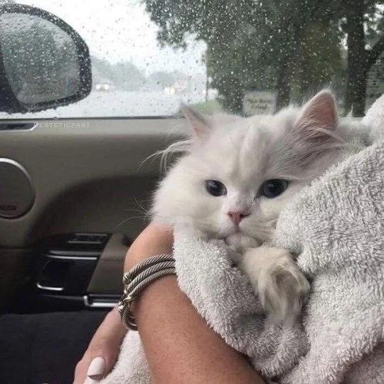 【貓咪感冒癥狀】鼻頭乾燥發熱?小心這 8 種癥狀是「貓咪感冒」了! | CatCity 貓奴日常