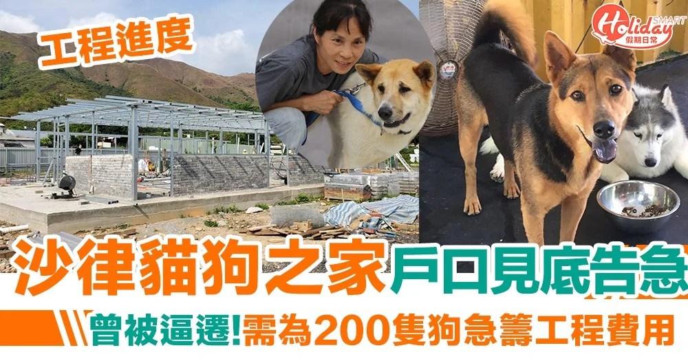 沙律貓狗之家戶口見底告急!曾被逼遷需為200隻狗建狗屋 | HolidaySmart 假期日常