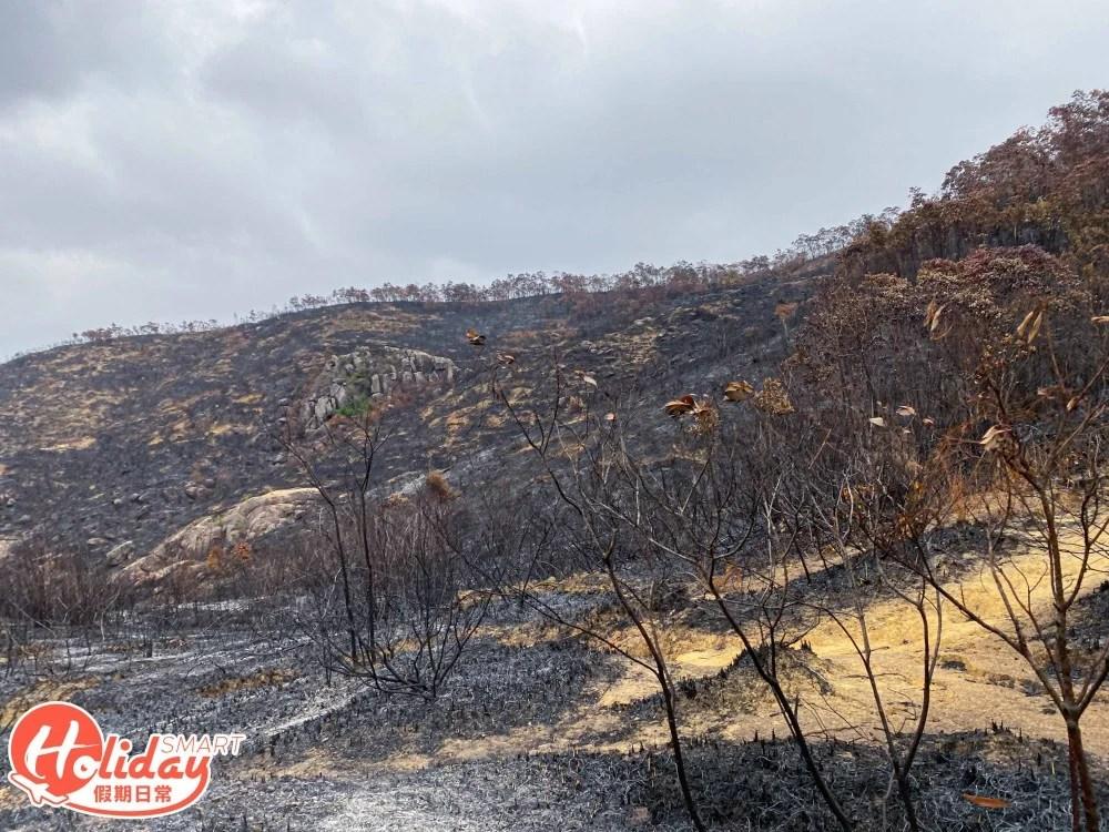 【馬鞍山山火】直擊馬鞍山山火後情況!動植物被燒死 自然教育導師:人為所致 | HolidaySmart 假期日常