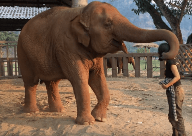 Caretaker Swats At Elephant With A Rag, But It's The Next Moment That's  Melting Everyone's Heart – BonVine
