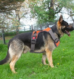 details about soft breathable no pull large l dog harness walk out ball training collar vest [ 1003 x 1003 Pixel ]