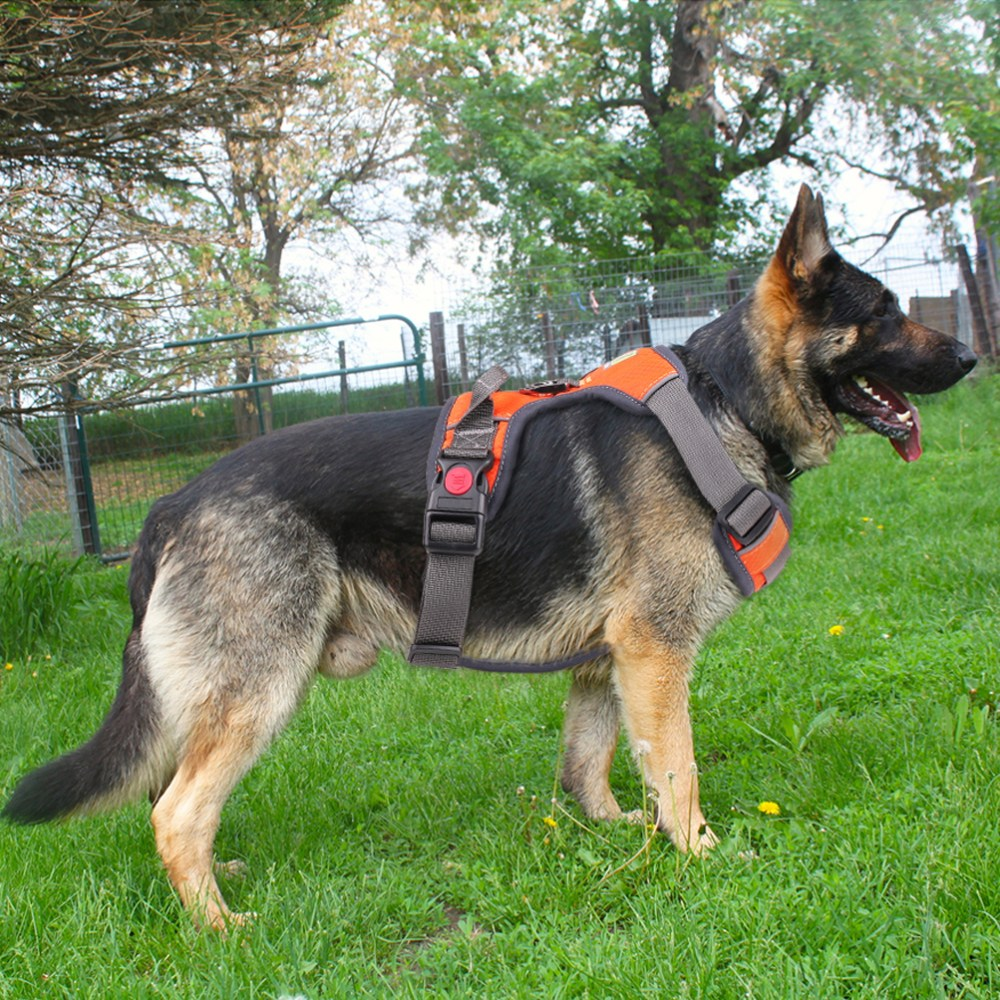 medium resolution of details about soft breathable no pull large l dog harness walk out ball training collar vest