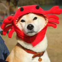 iDog and iCat: snood is iDog IDOG makeover or Buri crabs ...