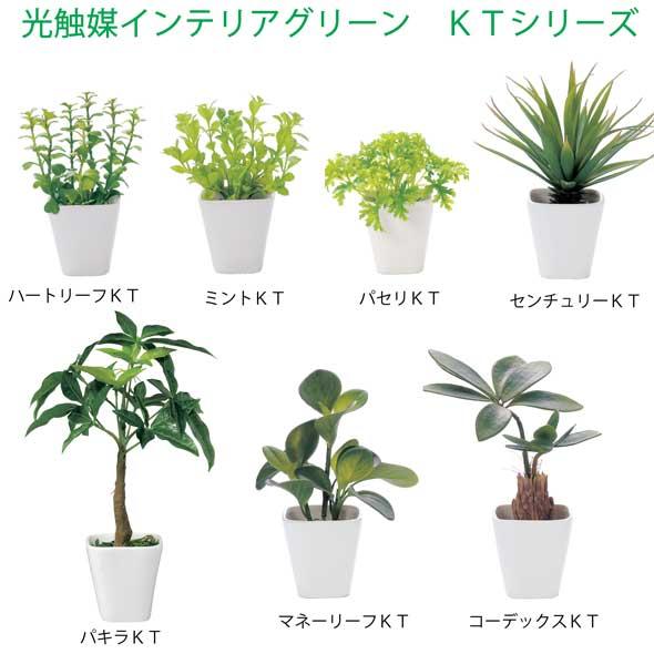 sapporo-zakkas | 日本樂天市場: 可愛的人工室內植物室內綠色光催化劑綠色 KT 系列 Aquatica 法典世紀方式葉薄荷葉 ...