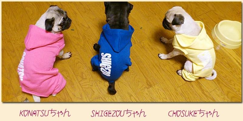 【ドッグウェア】愛犬の★お名前入り★オリジナル カラフルトレーナー!