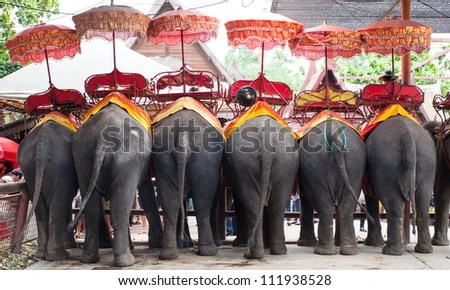 thai Elephant - stock photo