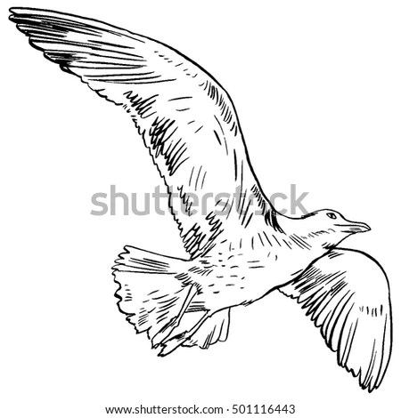 Royalty-free Spread wing eagle banner #32019742 Stock