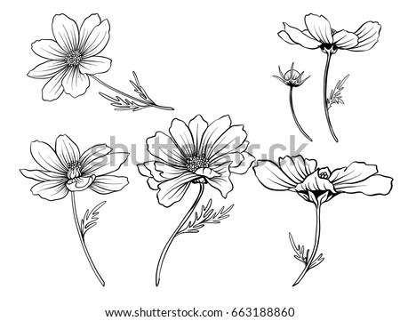 Floral Water Lily Elements for design,… Stock Photo