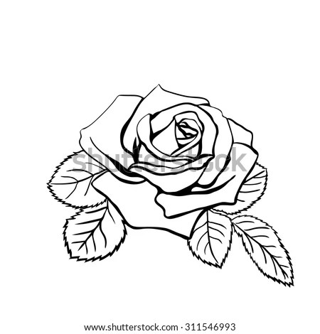 Sketch rose, hand drawn, ink style Stock Photo 189352622