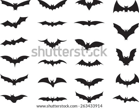 70 Years of Bats