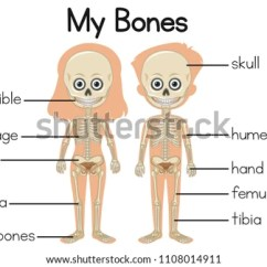 Rib Cage Bone Diagram Poe Wiring Vector Download Free Art Stock Graphics Images My Bones With Two Children Illustration