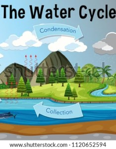 The water cycle diagram illustration also free vector download art stock rh vecteezy