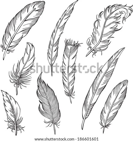 Royalty-free Silhouettes feathers vector illustration