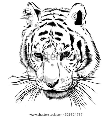Royalty-free Tiger face black and white with the