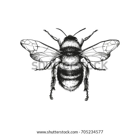 Get Free Animal and Insects Images, CC Pictures Online