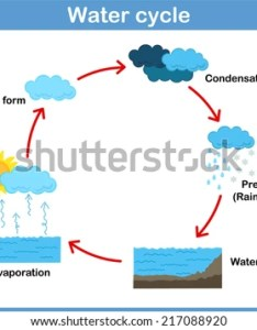 Vector cycle of water for kids also free diagram download art stock rh vecteezy