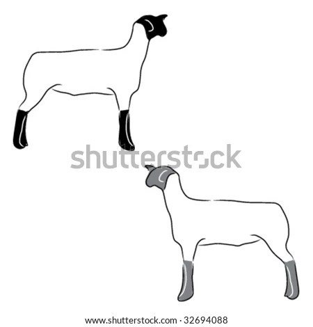 4h with sheep