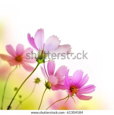 stock photo : Beautiful Floral Border.Flower design