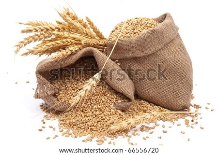 stock photo : Sacks of wheat grains