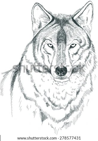 A Sketch Of A Wolf. Handmade. Stock Vector Illustration