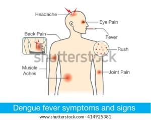 Diagram For Health Check When Have Dengue Fever Symptoms