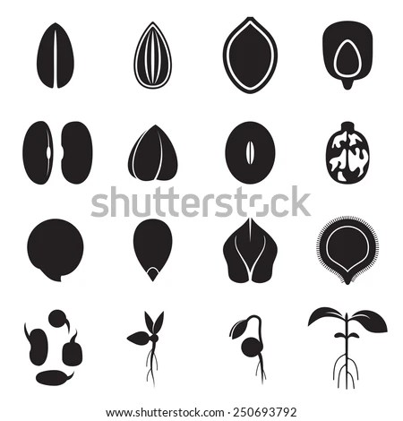 Vector Images, Illustrations and Cliparts: Seed icon set