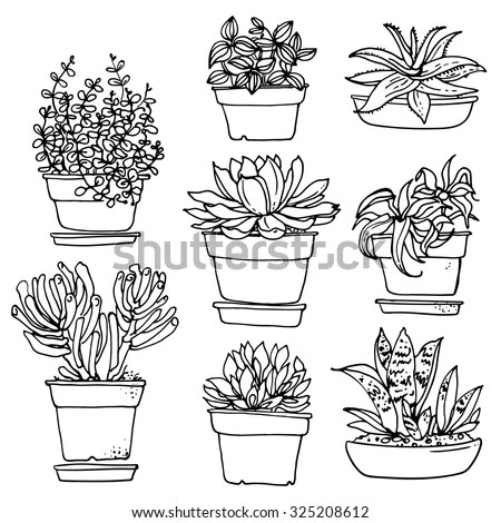 Set of succulent plants and cactuses in… Stock Photo