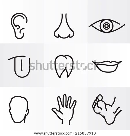 Picture Of Eyes Nose And Ears Coloring Pages