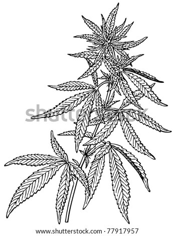Vivo Cannabis Us Stock Symbol