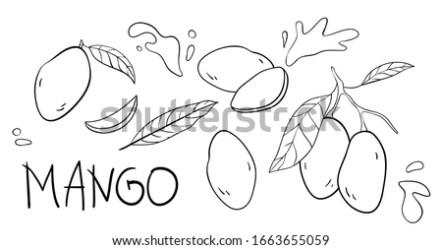 Mango Outline 1