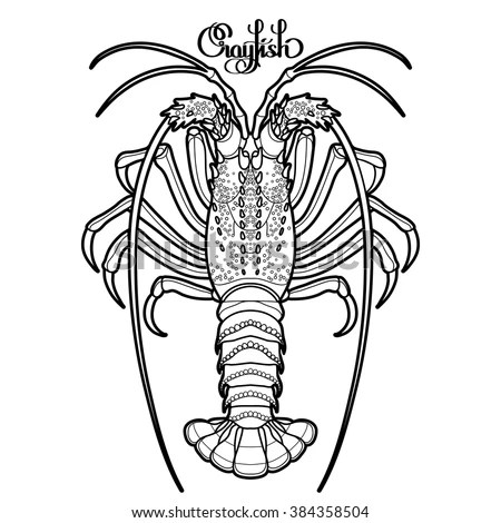 Graphic vector crayfish drawn in line… Stock Photo