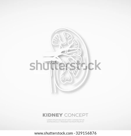 Royalty Free Stock Photos and Images: Outline Kidney