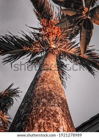 Background Kelapa Sawit : background, kelapa, sawit, Shutterstock, PuzzlePix