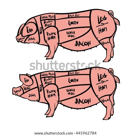 pork butcher cuts diagram delco alt wiring royalty free pig vector illustration 366831908 stock cut of meat set hand drawn isolated on white background drawing