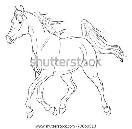 Arabian Horse Head Outline