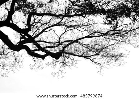 Popular Free Silhouette dead wood branches black and white