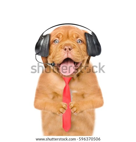 Free Photos Funny Puppy With Headphones Isolated On White