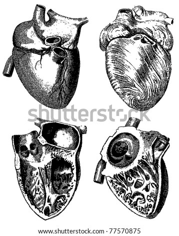 Vector Images, Illustrations and Cliparts: Engraving heart