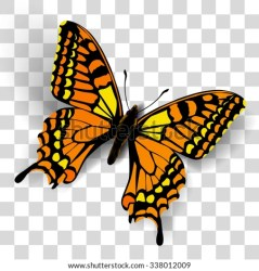 Clipart Transparent Butterfly Clipart Transparent Background Stunning free transparent png clipart images free download