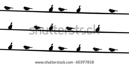 Black Birds On Electrical Wires Stock Photo 60397858